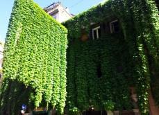 Palazzo ricoperto d'edera